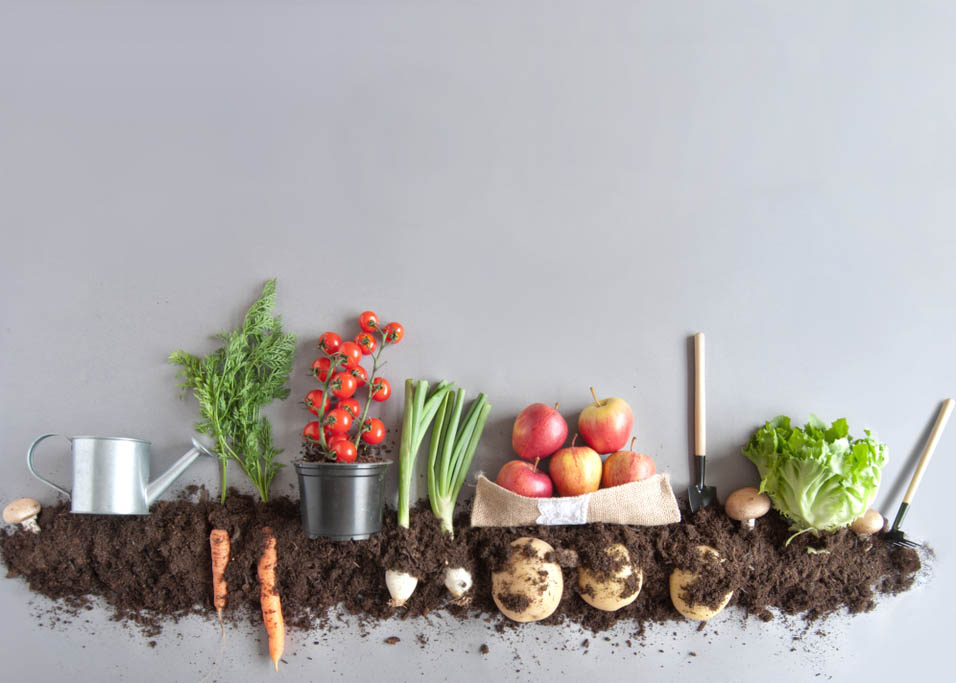 Organic-Lifestyle